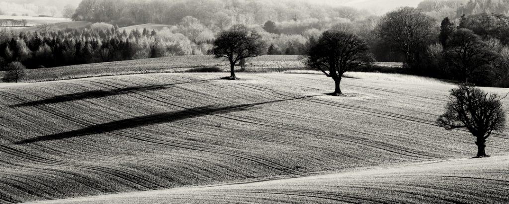 Three Trees, Shropshire