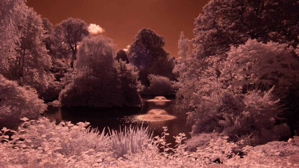 Untreated Infrared Photograph